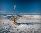 White Sands - New Mexico's Beach - Original Fine Art Travel Photography 16X20