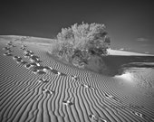 Footprints - Black and White Sands - Original Fine Art Travel Photography - 8x10