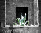 Custom Order For Drew - Agave ACEO - Signed - High Quality - POE & fPOE Member - Pompeii, Italy