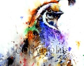 QUAIL Watercolor Print by Dean Crouser