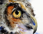 OWL Watercolor Print By Dean Crouser - Image Used By Audubon