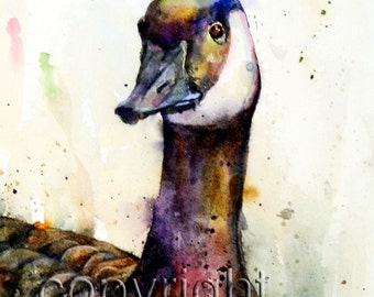 CANADA GOOSE Watercolor Print by Dean Crouser