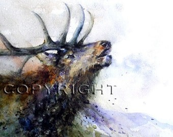 BULL ELK Watercolor Print by Dean Crouser