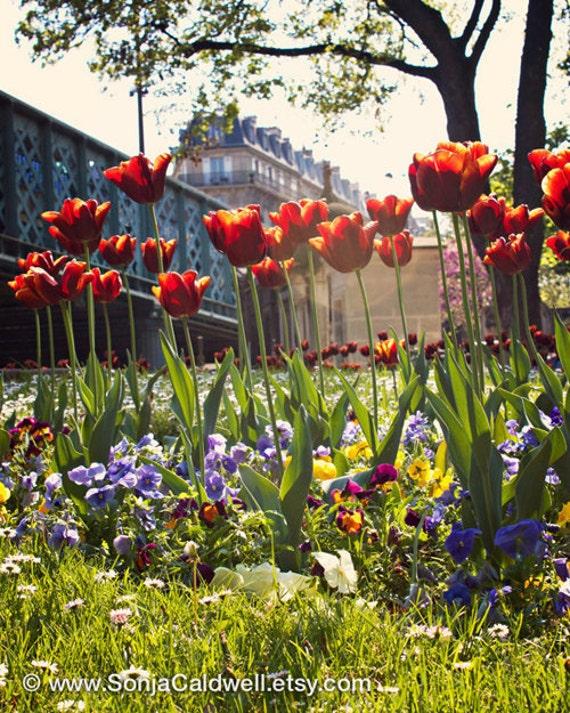 Springtime in Paris, Montmartre cemetery, crimson, bright-red tulips, flower photography  - 8x10 or 16x20  Original Fine Art Photograph