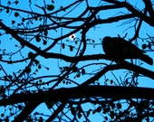 Nature Photography - Blue Decor - Tree Photography - Silhouette Print - Paris France Photo - Bird Photograph French Decor Wall Art