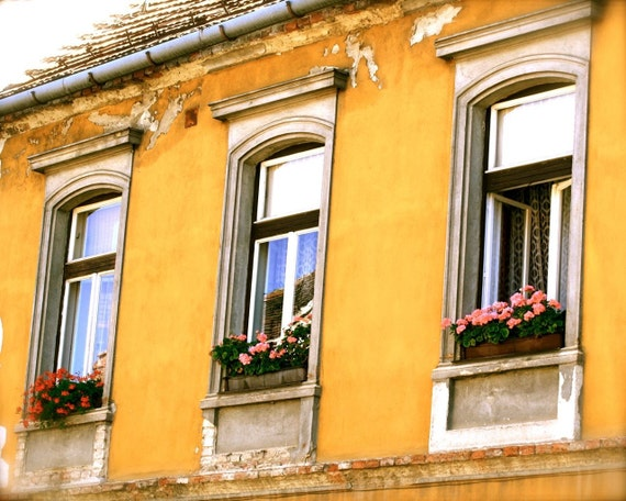 Hungary Photography - Hungarian Architecture Print - Window Boxes - Yellow Wall Art - Sopron Flowers Rustic Home Decor Golden Print