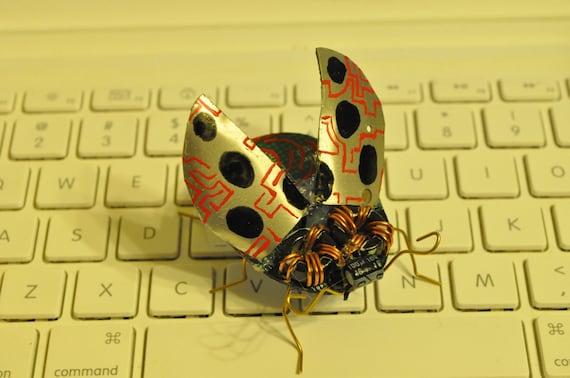 Coccinellidae Circuiticus
