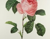 Redoute Fruit Flower Decorative Paper Nature Illustration Print