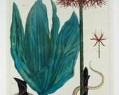 Take 50% OFF - Plants & Flowers - Nature Animal Plant Flower Print Illustrations