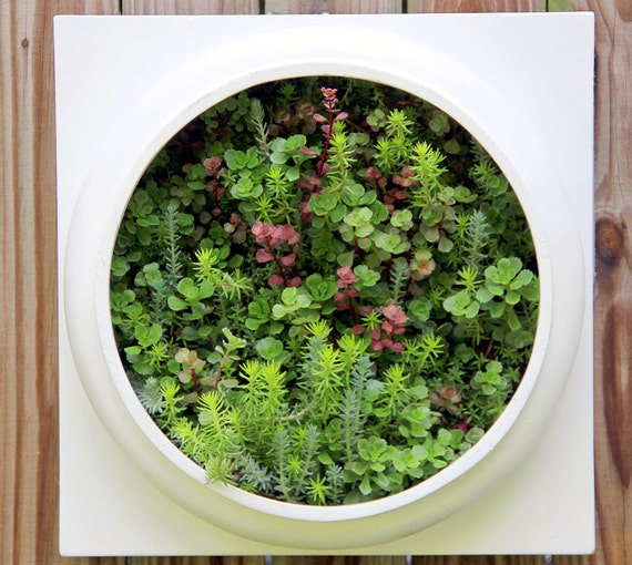 Amazing Succulent Living wall planter, Comes pre planted & ready to hang. Picture frame wall pot hanging plants fairy terrarium mini garden