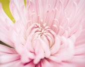 Pretty with Pink - Fine Art Print - 8x10