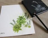 Limited Edition Art Set No.2 - Succulents