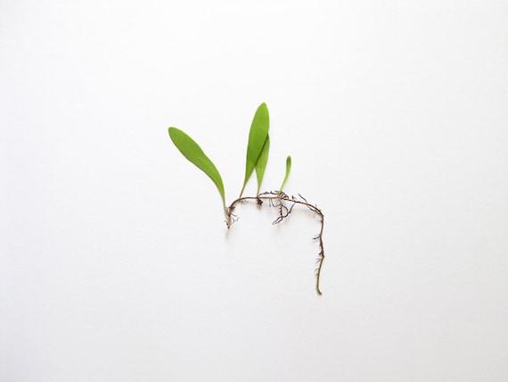Tempo of Life No.1 Minimal Photography - 8x10 Botanical Photo Print / Modern Wall Decor