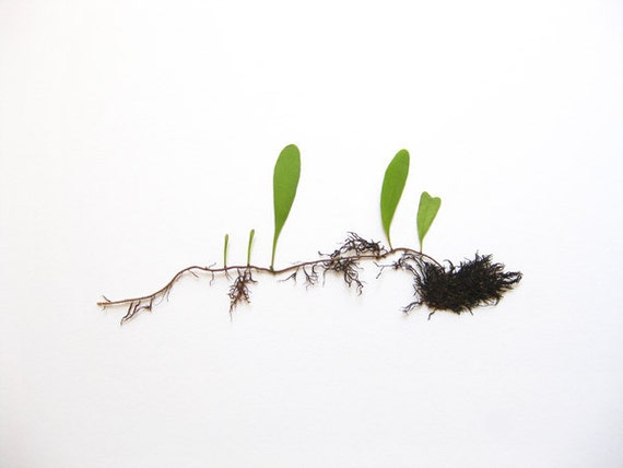 Tempo of Life No.3 Minimal Photography - 8x10 Botanical Photo Print / Modern Wall Decor