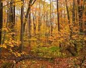 "Autumn Walk / 8x10 fine art photograph from my ""Autumn"" collection"