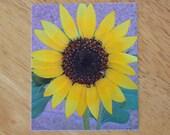 Sunflower Magnet Yellow Photo