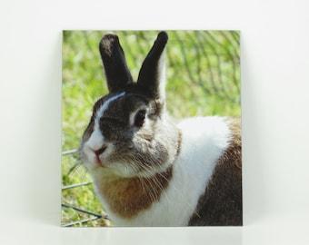 Bunny Rabbit Photo Magnet