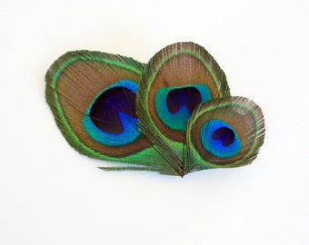 Forgetful - Peacock feather clip / Peacock fascintor / Small peacock hair accessory