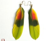 Colorful parrot feather earrings - Amazon Tail