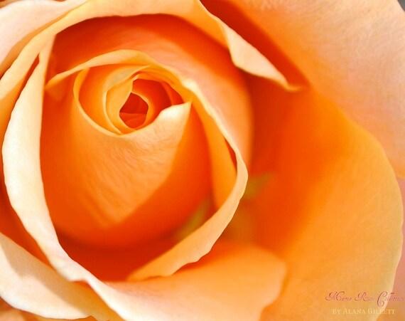 Orange Kiss- Fine Art Photopgraphy print 5x7  by Alana Gillett- Rose Flower Romantic Tangerine Orange Petals Wall Art Home Decor