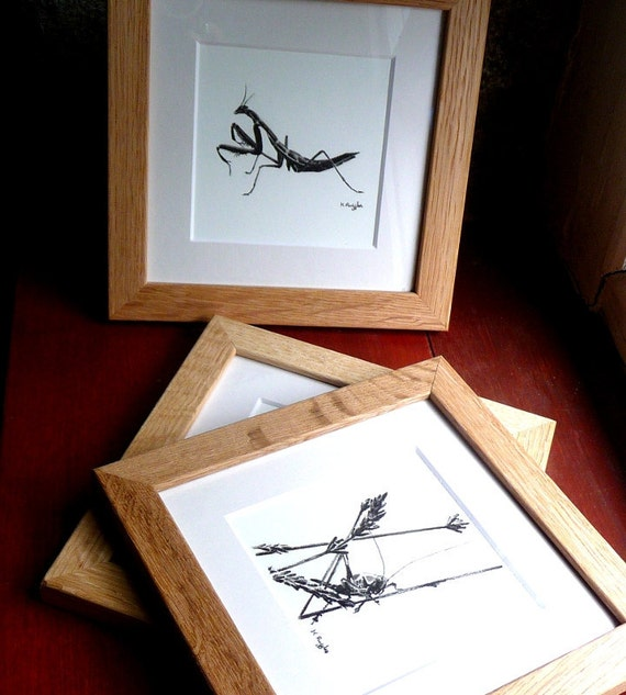 Insect original charcoal sketches set of three