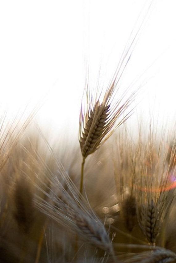 farm photograph, wheat photo, rustic decor farmhouse, bakery photo, kitchen art, gold, honey, tan, fine art print, farm print,