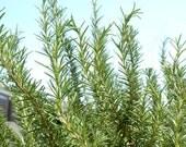Fresh Organic Rosemary Pieces