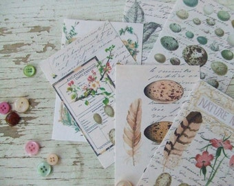 Mini notecards - nature notecards - eggs feathers script  - embellishments
