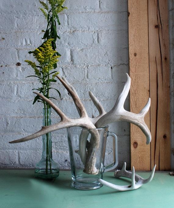 Single naturally shed deer antler