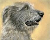 Irish Wolfhound 10 x 8 Art Print