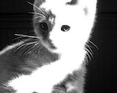 Cute Little Kitten - Adorable Black and White Home Decor Fine Art Photograph - 5x7