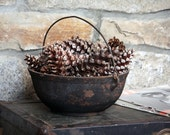 Real Pinecones - One Dozen, 12 Medium Natural Gathered CT Pinecones - Nature Home Decor Harvest Rustic Centerpiece Holiday Thanksgiving