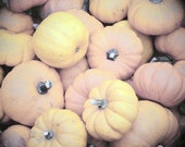 Fall Pumpkins - Fine Art Photograph - 5x7 - Pastel, Autumn Decor, Orange, Yellow, Halloween, Gourds, FREE Shipping - elitett - OneDecember