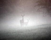 Early Morning Deer - Fine Art Photograph - Nature, Animal