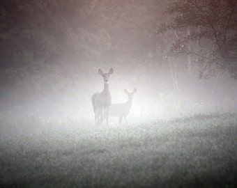 Early Morning Deer - Fine Art Photograph - Nature, Animal