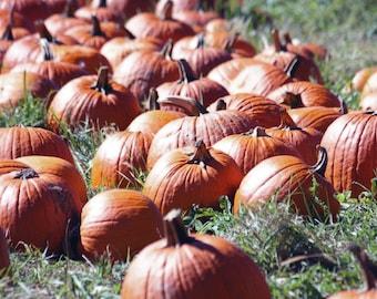 Pumpkin Patch - Home Decor Fine Art Photograph - Fall, Autumn Photography