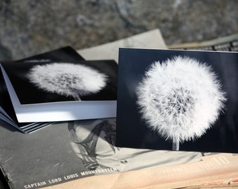 Black and White Notecards, Set of 12 Blank Inside, Hanging On Dandelion, Original Photography Art Stationary Note Cards