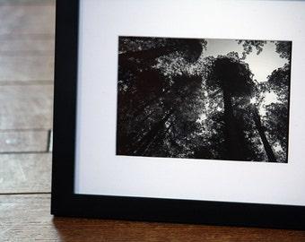 Framed 5x7 Black and White Original Fine Art Photography Modern Nature Sunshine Redwoods
