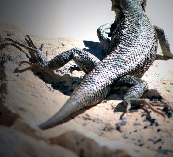 Lizard - Fine Art Photography Nature Photograph, Home Decor Wall Hanging Free Shipping