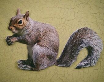 Squirrel Cutout