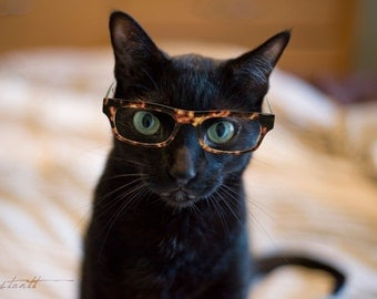 Photographic Print - Cat in Glasses 2 - 5x7