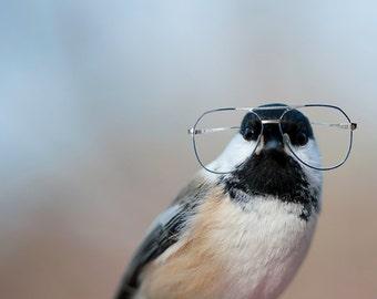 Bird Brain - Chickadee in Glasses (5x7)