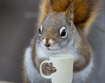 Bright Eyed & Bushy Tailed - Coffee Loving Squirrel (8x10)