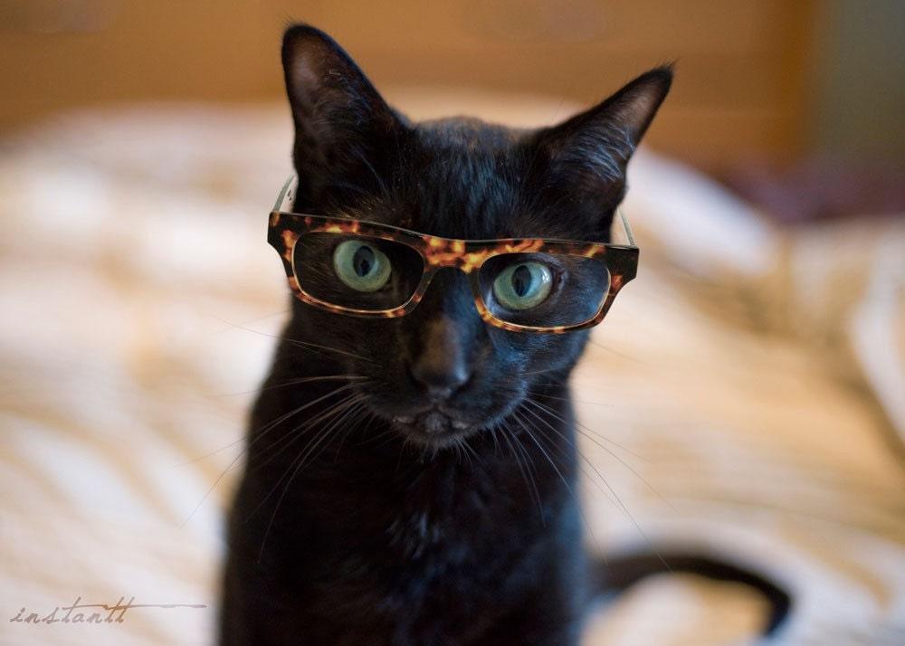 Photographic Print Cat in Glasses 2 8x10