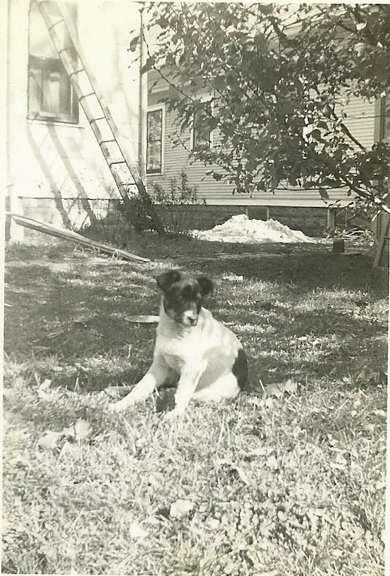 Vintage Photo -P IS FOR PUPPY - Cute puppy looking for someone to play with