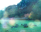 deer herd at twilight - fine art animal photo print - square 5 x 5