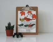 RESERVED // Mid Century Bird Illustration - 3