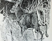 Print of Ink Drawing of a Deer Running in the Forest