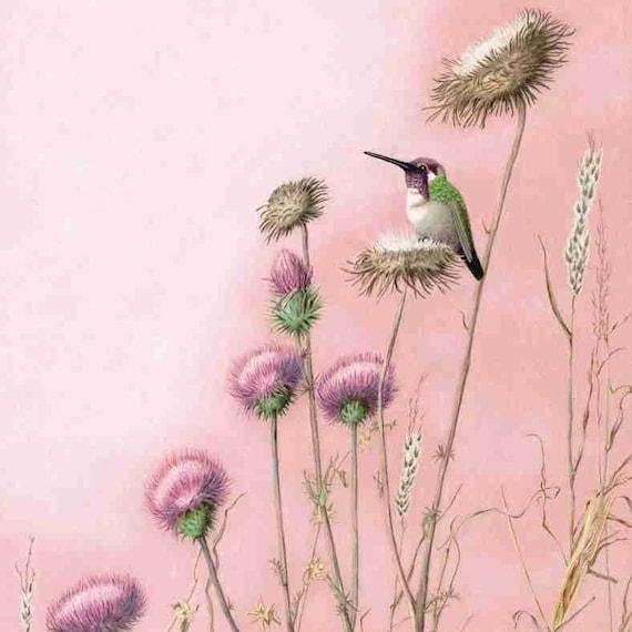 hummingbirds paintings in pinks 11X16 print, Costa's hummingbird on a thistle seed head, Bird Art, nature