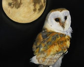 Pastel Drawing Barn Owl Wildlife Bird Fine Art ACEO Print